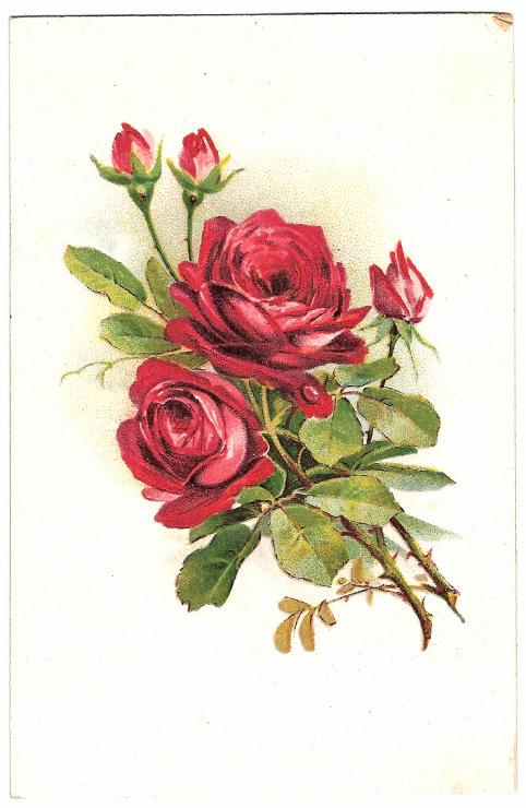 Рисуем открытку с цветами 730