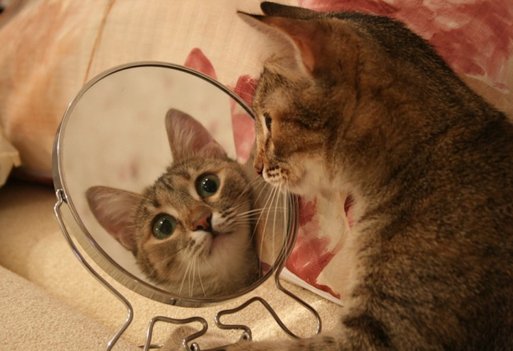 коты и зеркало фото
