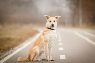 Выездной фотограф Anna Korotkova - Серпухов